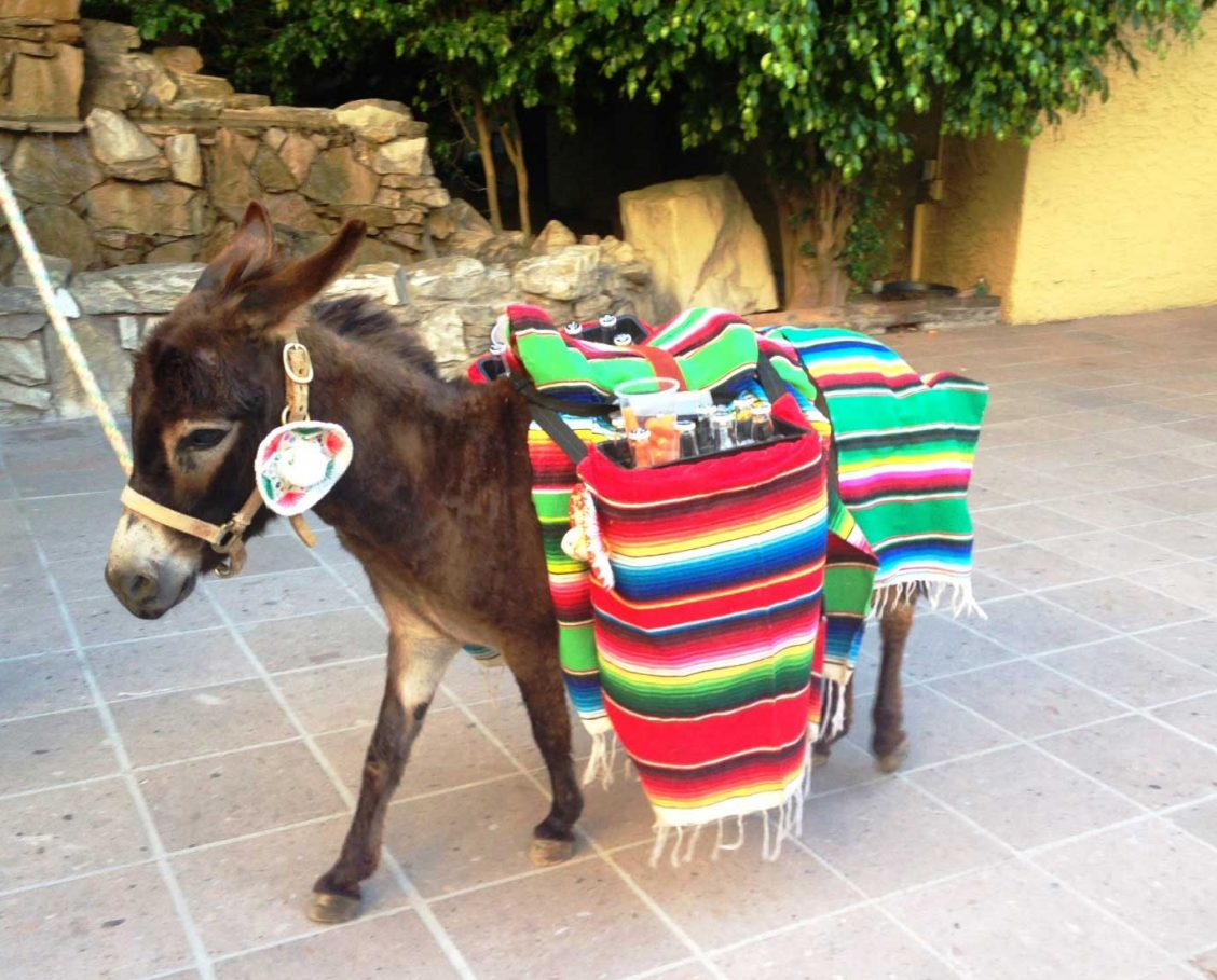 Beer burro for themed events