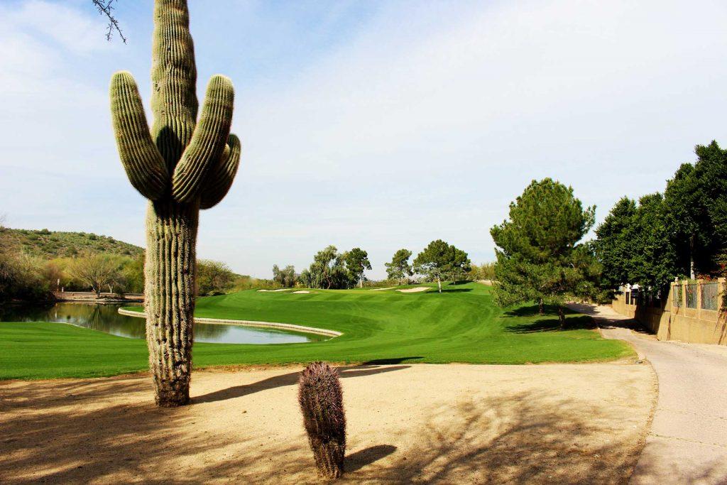 Saguaro cactus and cart path along Lookout Mountain Golf Course
